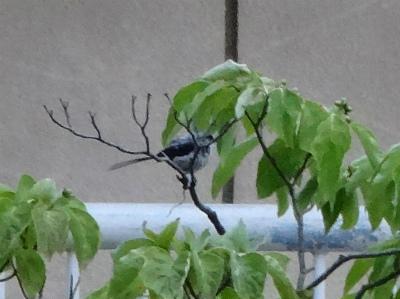 0630野鳥