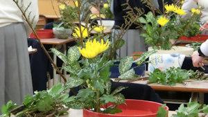 一人で活けた菊が静かに立って存在を主張してます